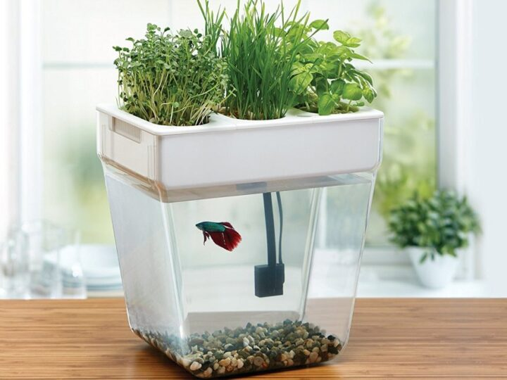 Water Garden Is an Amazing Mini Aquaponics Ecosystem for Your Home