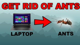 How to protect laptop from ants